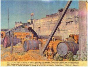 refuge LPA Calais vers 1965