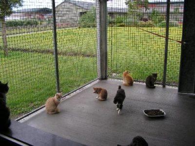 chats lpa calais